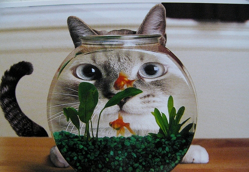 cute, cat, watching, nice, fish, aquarium, face | Inspirational pictures