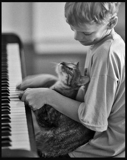 i love cats =^.^= / Piano-playing cat