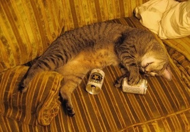 Cat Drinking Beer Funny Pics cat-drinking-beer-09 – Fashion Trends, Glamour Models
