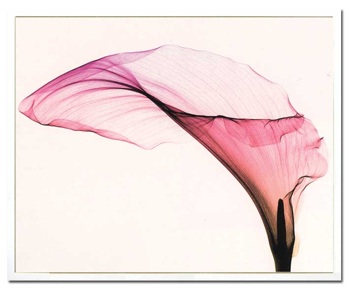 steven n meyers giant calla sumally サマリー