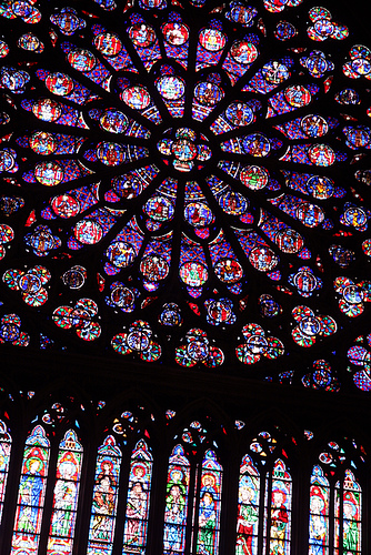 notre dame - purple rose | Flickr - Photo Sharing!