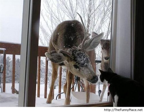 Let us in please, it's cold outside - Funny Pictures, Awesome Pictures, Funny Images and Pics on imgfave