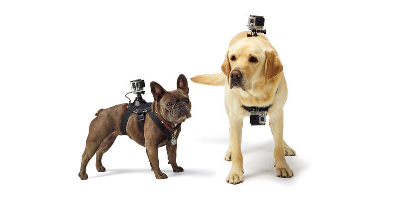 GoPro Fetch (Dog Harness)   Capture the world from your dog's point of view.