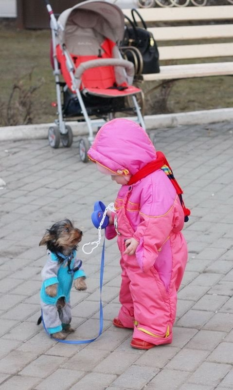 ~♥• Pets Palace •♥~ / Who's Walking Who? To Darn Cute :)