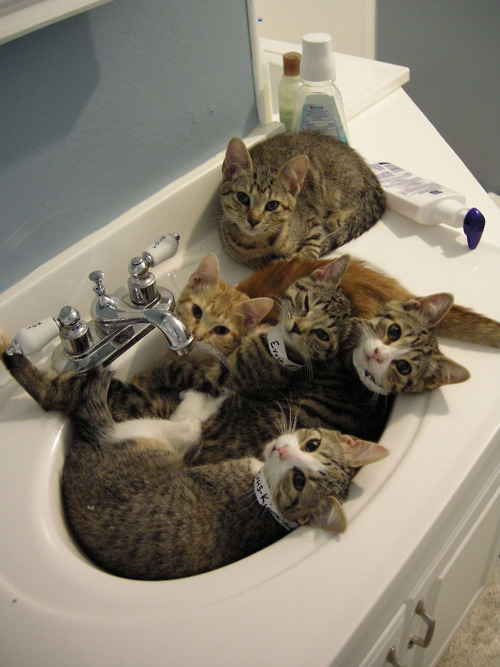 20 Cats In Sinks