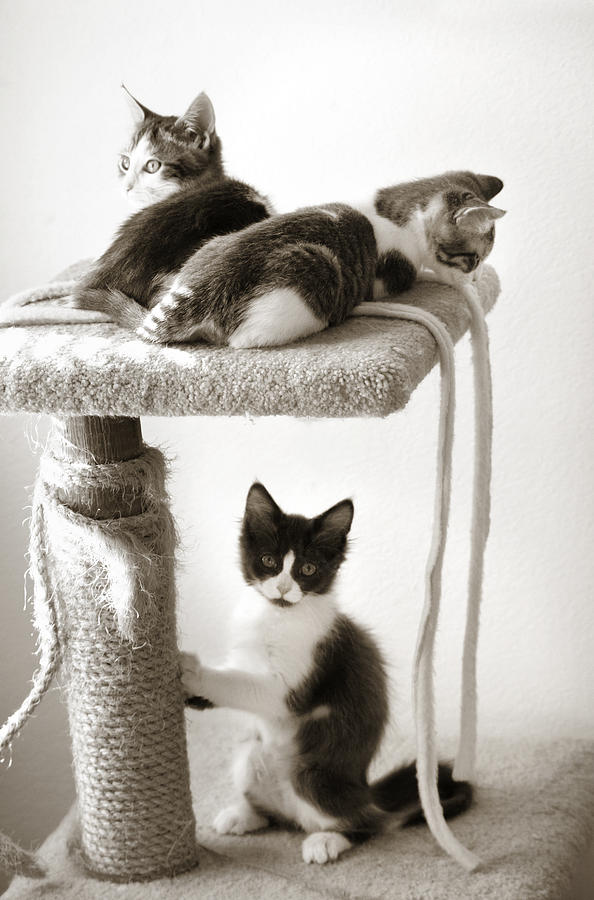 Sweet Threesome Photograph by Marilyn Hunt - Sweet Threesome Fine Art Prints and Posters for Sale