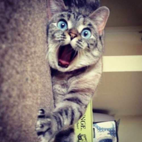 cat | We Heart It