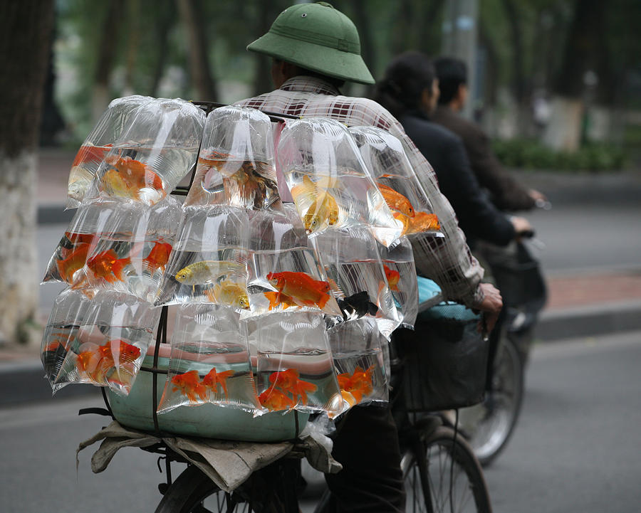 Goldfish In A Bag Photograph by Chuck Kuhn - Goldfish In A Bag Fine Art Prints and Posters for Sale