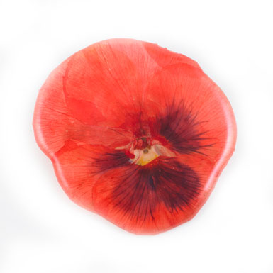 V&A Victoria Albert Museum > Main Section > Shop by theme > Pansy Brooch (Assorted Red/Pink)