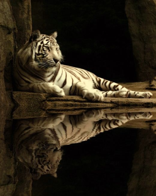 Pictures: Superb Examples of Animal Photography | Amazing, Funny, Beautiful, Nature, Travel and much more...