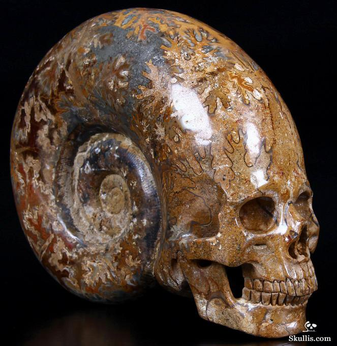 """GIANT 7.3"""" Ammonite Fossil Carved Crystal Skull, Super Realistic"""