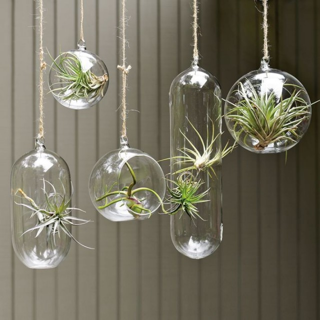 Shane Powers Hanging Glass Bubble Collection - modern - indoor pots and planters - - by West Elm
