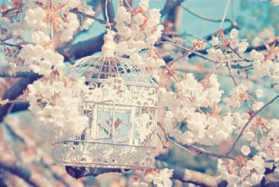 bird cage, cute, flowers, pretty - inspiring picture on Favim.com
