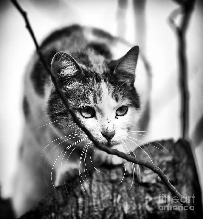 Peek A Boo Kitty Photograph by John Rizzuto - Peek A Boo Kitty Fine Art Prints and Posters for Sale