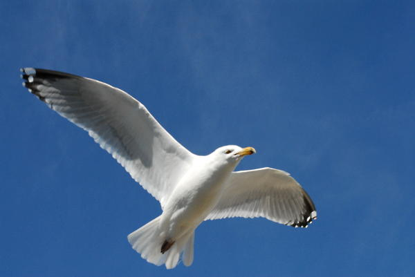 Gulls 102 Photograph by Joyce StJames - Gulls 102 Fine Art Prints and Posters for Sale