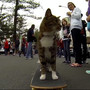 Adorable Cat Pulls Off Awesome Skateboard Moves - My Modern Metropolis