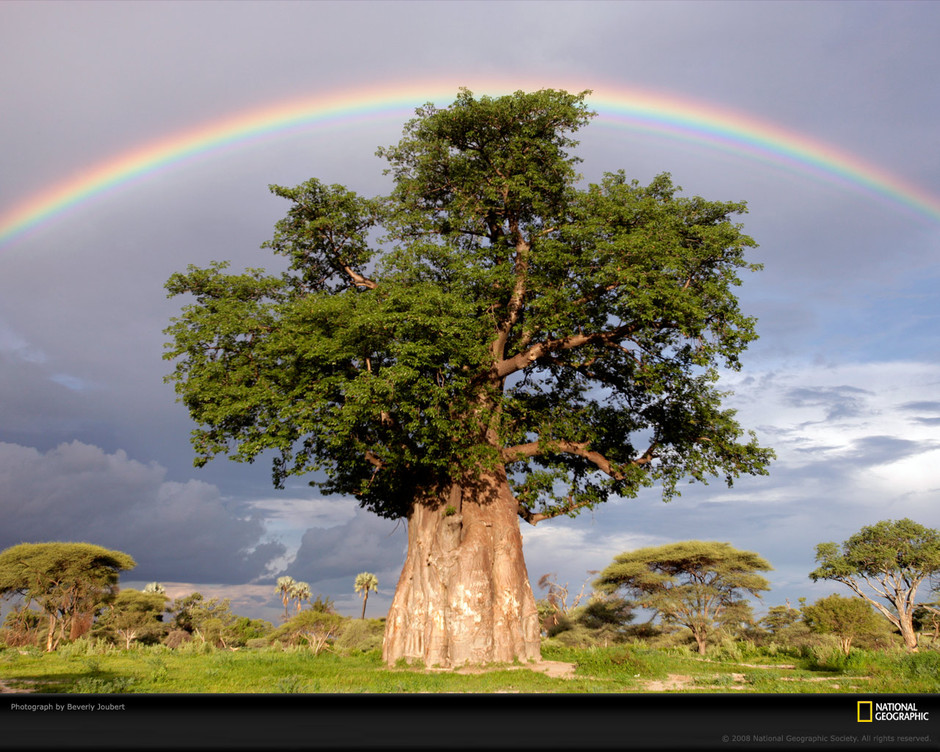 rainbow-baobab-tree-joubert-1011931-xl.jpg 1,280×1,024ピクセル