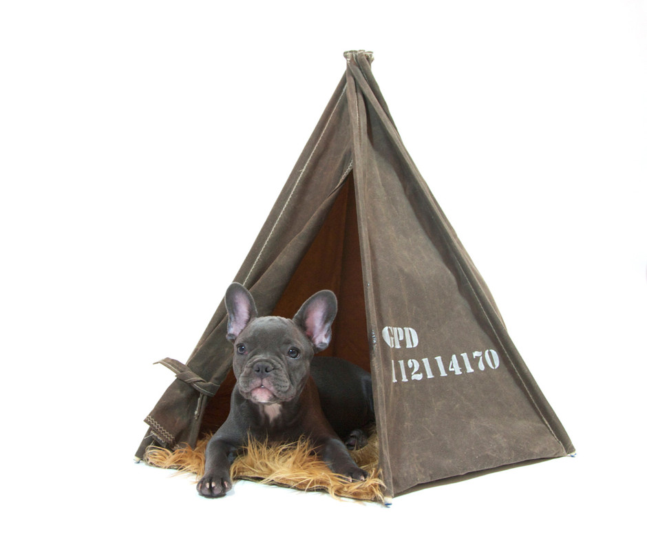 Dark Tan Waxed Canvas Field Tent by GPD 24 inch by gopetdesign
