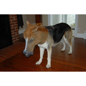 Customer Image Gallery for Accoutrements Horse Head Mask