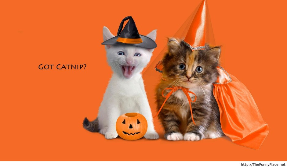 Funny halloween cat picture - Funny Pictures, Awesome Pictures, Funny Images and Pics