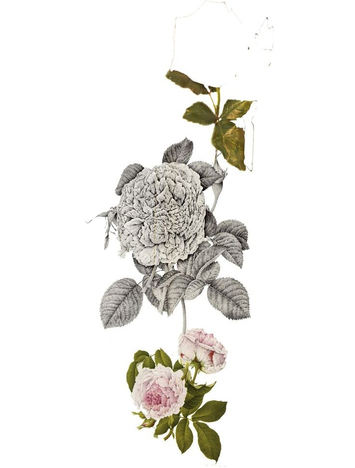 floral collage by ayumi iguchi | floral | Pinterest