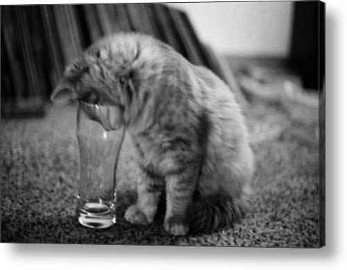Betty The Cat Acrylic Print By Randall Arthur