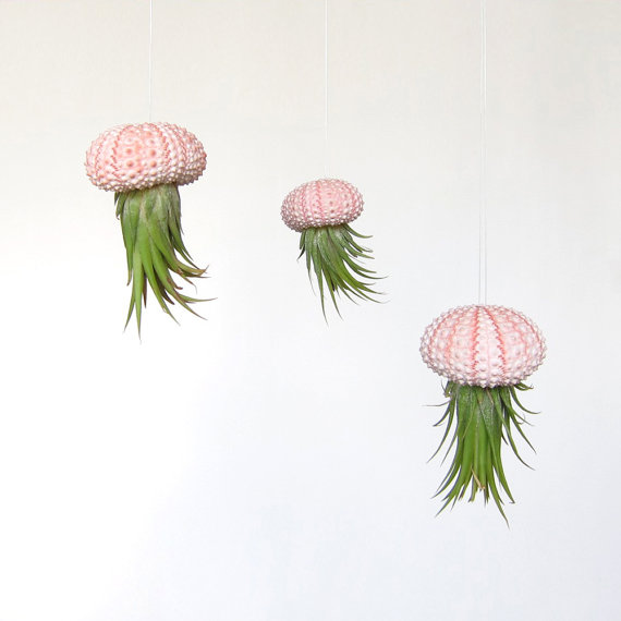 Set of 3 Hanging Air Plants // Unique Home Decor // by groundlings
