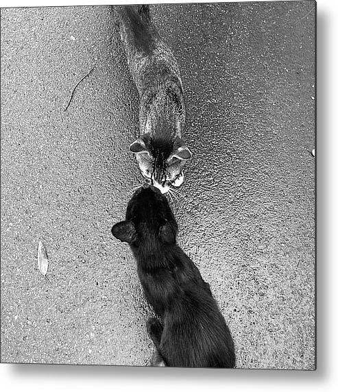 Two Kittens Which Kiss Metal Print By Photographer, Loves Art, Lives In Kyoto