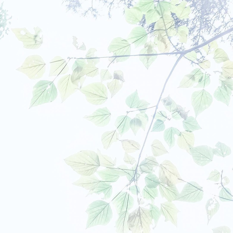 "siropさんはInstagramを利用しています:「drops note ""natsu iro"" #green #spring #summer #leaves #osanpocamera」"