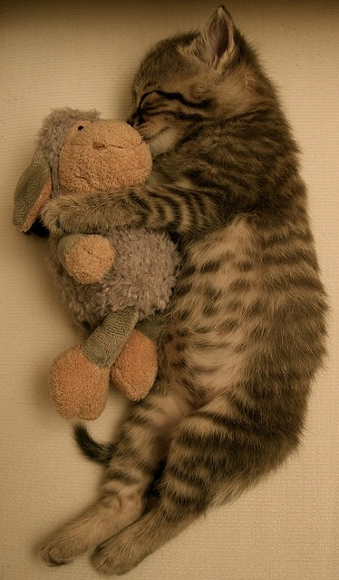 Art,Beautiful,Cat,Cute,Hug,Kitten - inspiring picture on PicShip.com