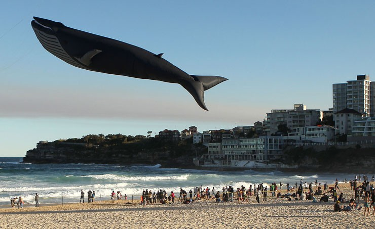 Whale stars at Sydney kite festival - picture | Photos | The Week UK