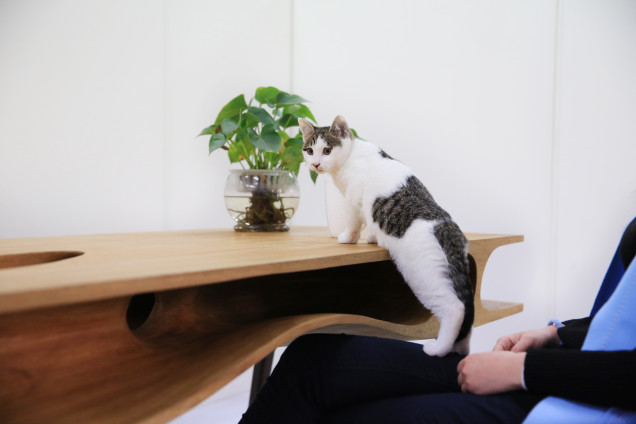 This Sleek Table Is Hiding a Playground For Cats