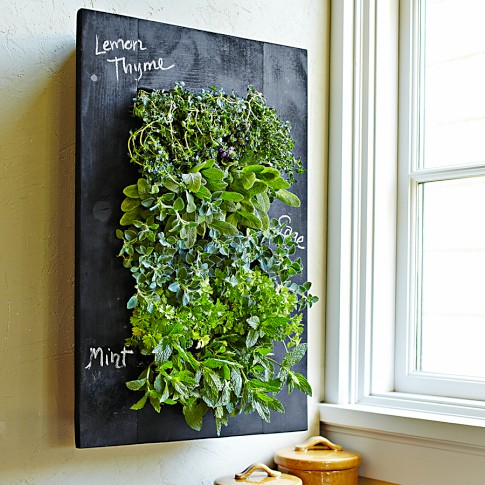 Chalkboard Wall Planter | Williams-Sonoma