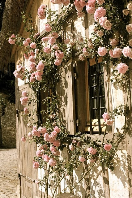 windows and flowers!! | garden party