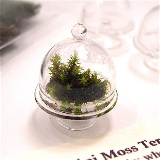 Interiors ◆ Plant / Miniature Moss Garden Terrarium Kit with Glass Cloche via Etsy.