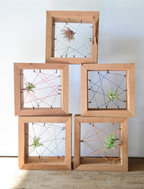 Air plant personal Rustic Reclaimed Recycled by triple7recycled