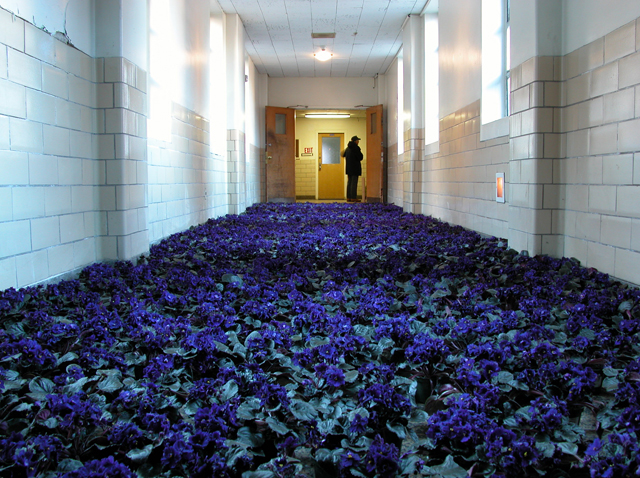 Bloom: 28,000 Potted Flowers Installed at the Massachusetts Mental Health Center | Colossal