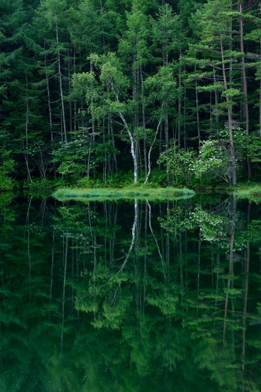 Pin by pneumaneuma on Treasure of forest | Pinterest