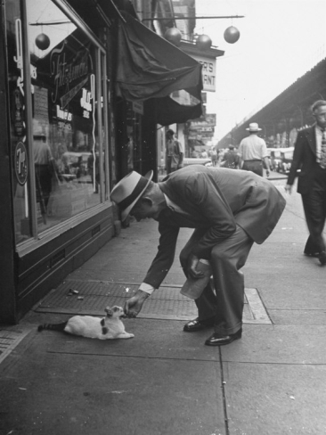 Man Bending over to Touch Cat Sitting on Sidewalk Premium Photographic Print by Nina Leen at Art.com