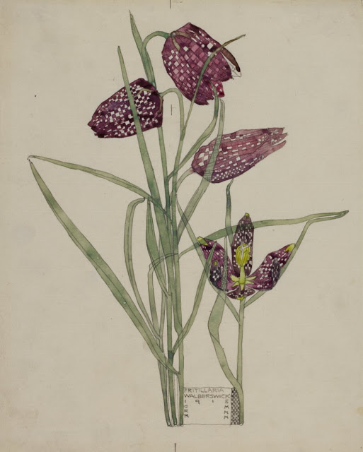 Fritillaria Watercolor: Charles Rennie Mackintosh | Content in a Cottage