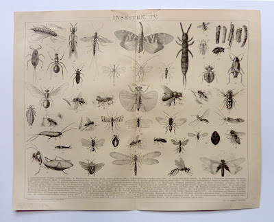 Encyclopedic insects