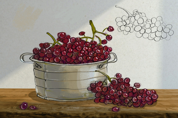 BLOOD of GRAPES on Behance