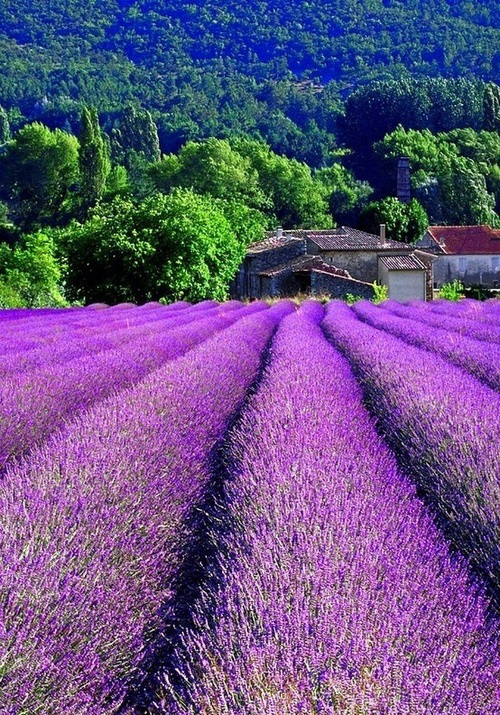 Lavender Field, Provence, France | The Best Travel Photos