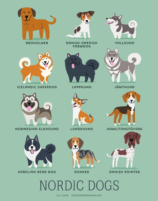 NORDIC DOGS Art Print by DoggieDrawings | Society6