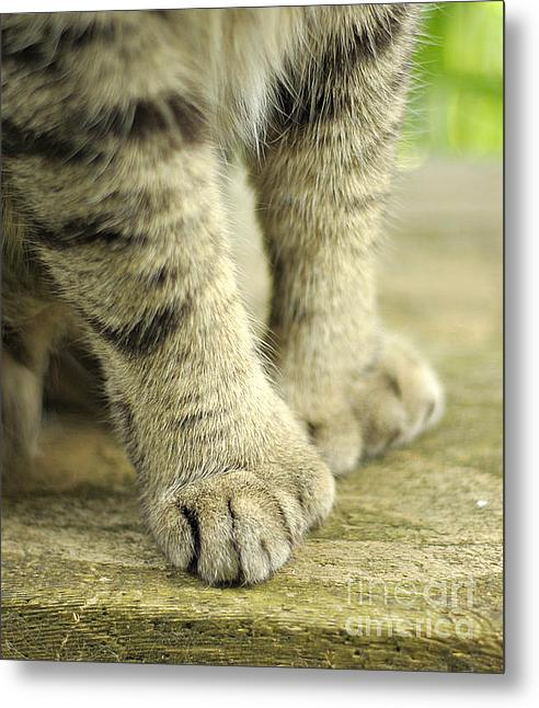 Paws For Thought Metal Print By Marilyn Wilson
