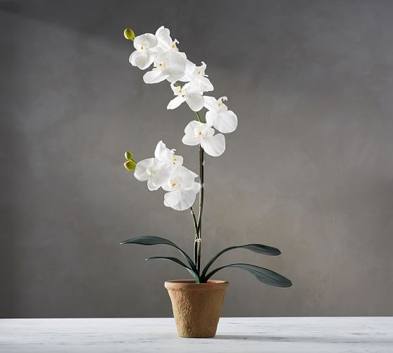 Faux Potted Orchid | Pottery Barn