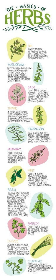 Varietats: The Basics of Herbs by Illustrated Bites