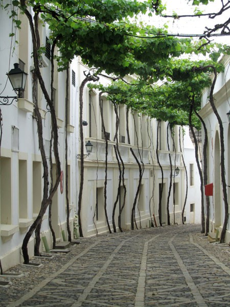 Fancy - Street in Jerez, Spain