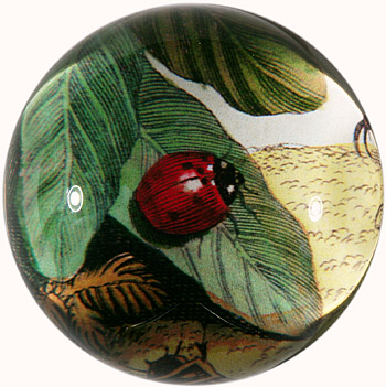 JOHN DERIAN LADYBUG ON LEAF DOME PAPERWEIGHT