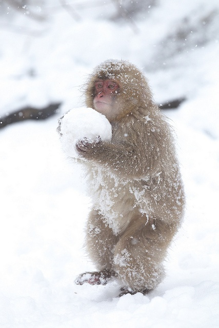 carrying the snowball | All God's Creatures